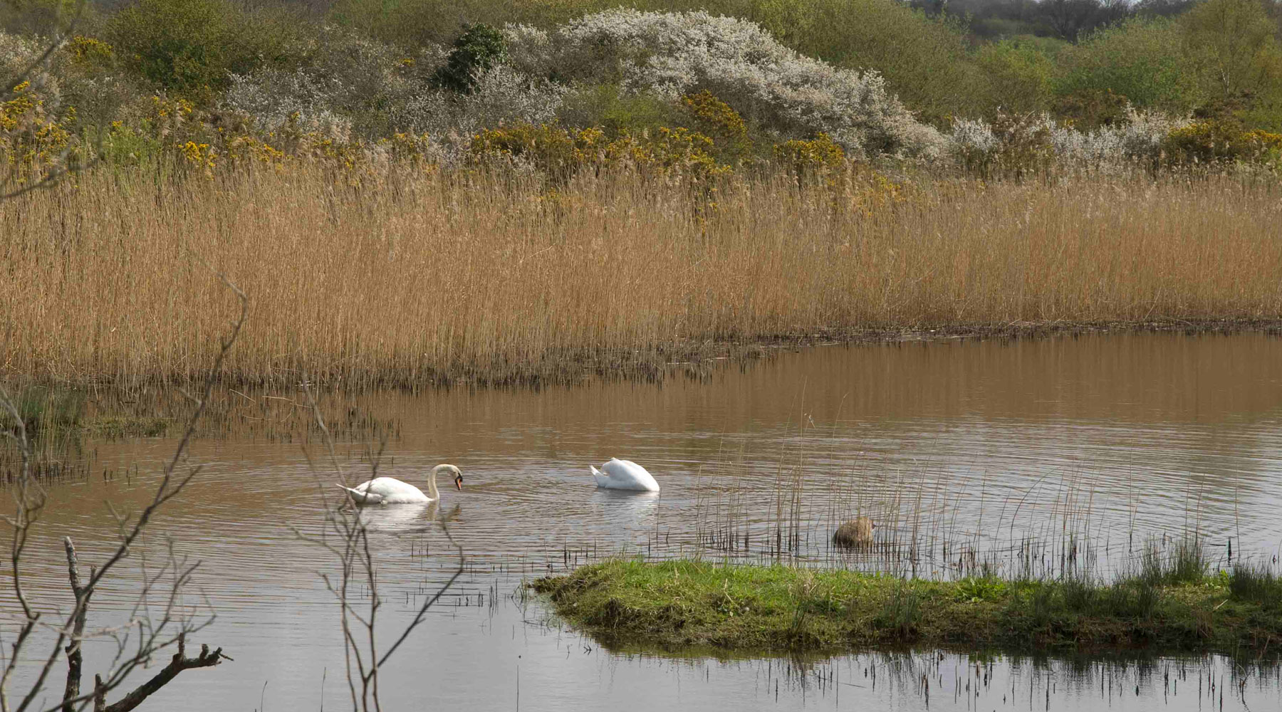 L Maiden | Teifi Marshes Nature Reserve
