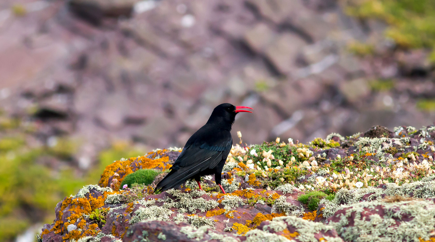 Mike Snelle | Chough